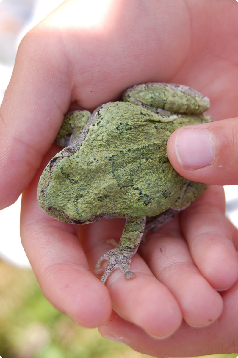 R8026 Toad