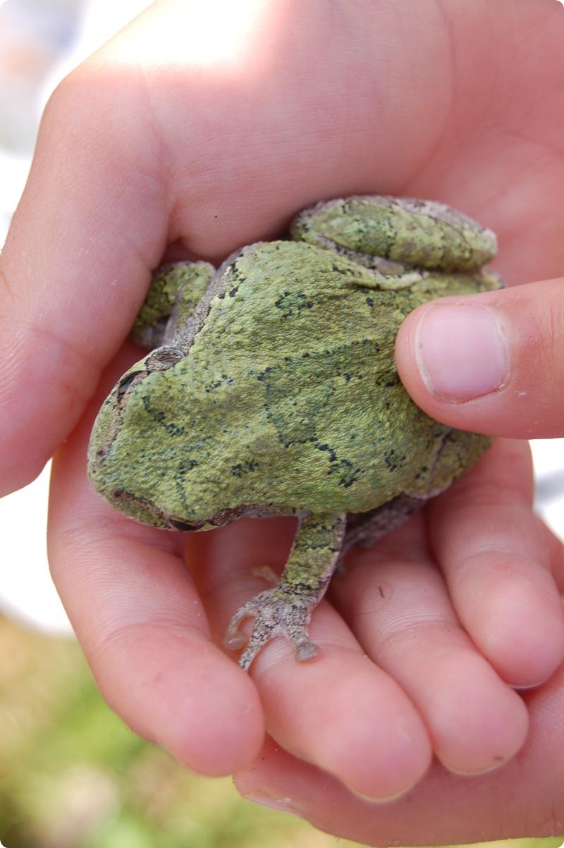 R8026_Toad.JPG
